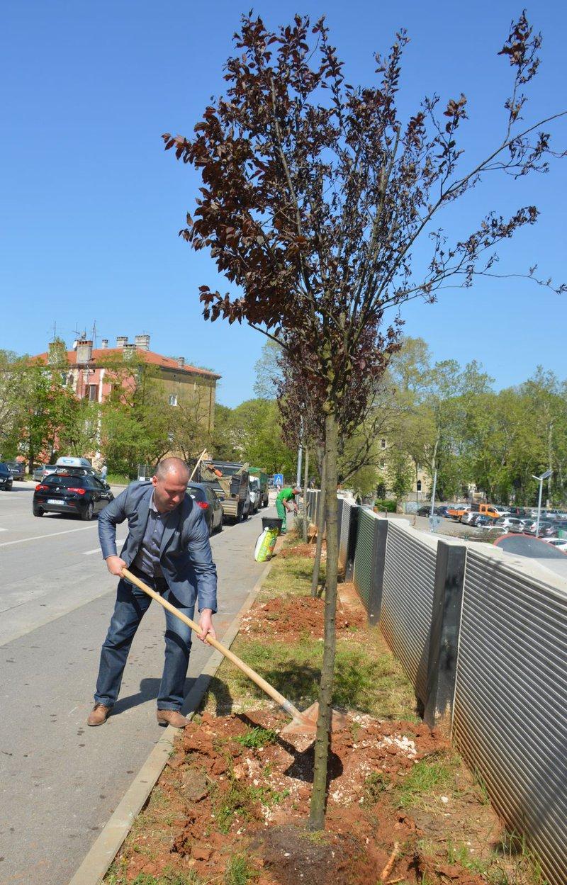 LokalnaHrvatska.hr Pula Zamjenik gradonacelnika Robert Cvek i Lumeni sadili stabla uz zid Rojca